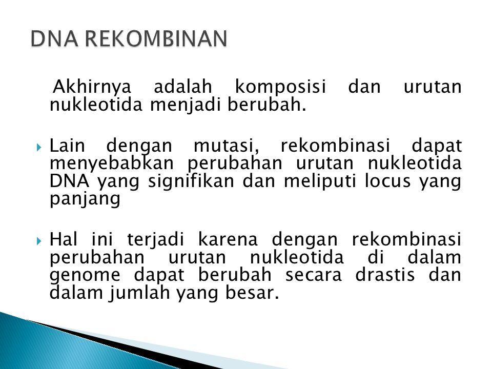 DNA REKOMBINAN Akhirnya adalah komposisi dan urutan nukleotida menjadi berubah.