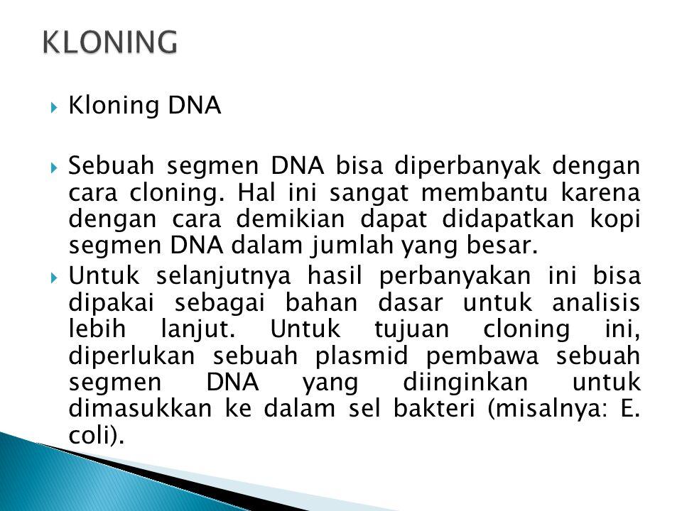KLONING Kloning DNA.