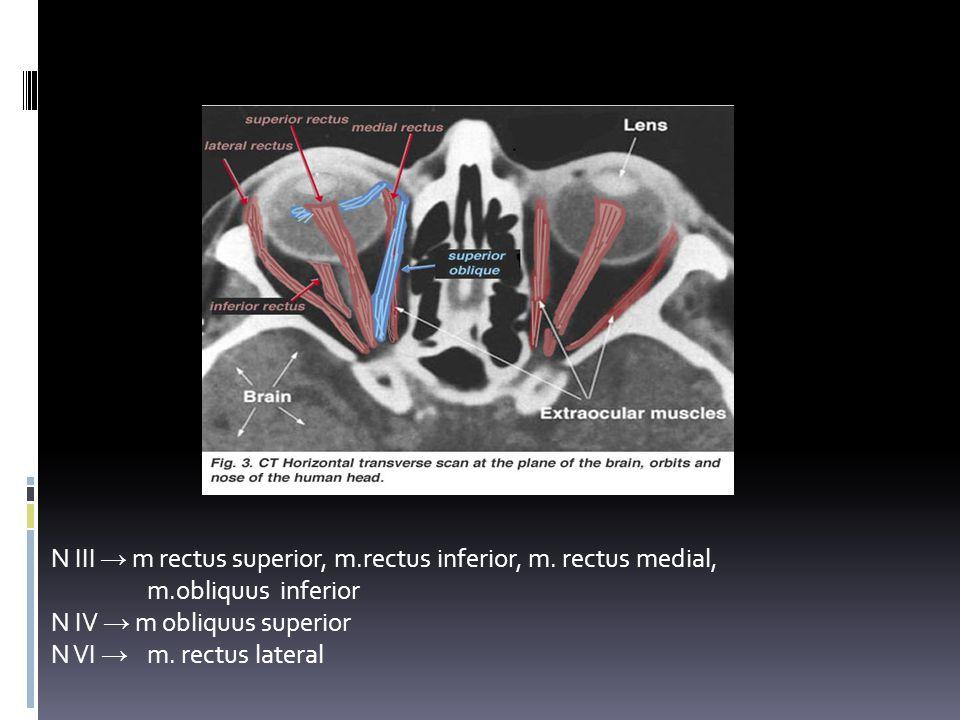 GERAK BOLA MATA N III → m rectus superior, m.rectus inferior, m. rectus medial, m.obliquus inferior.