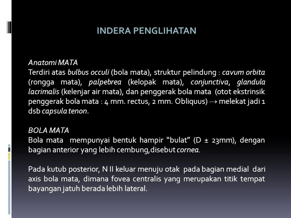 INDERA PENGLIHATAN Anatomi MATA