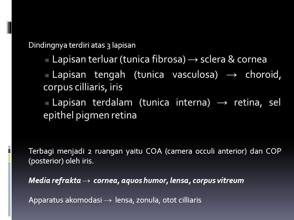 Lapisan terluar (tunica fibrosa) → sclera & cornea