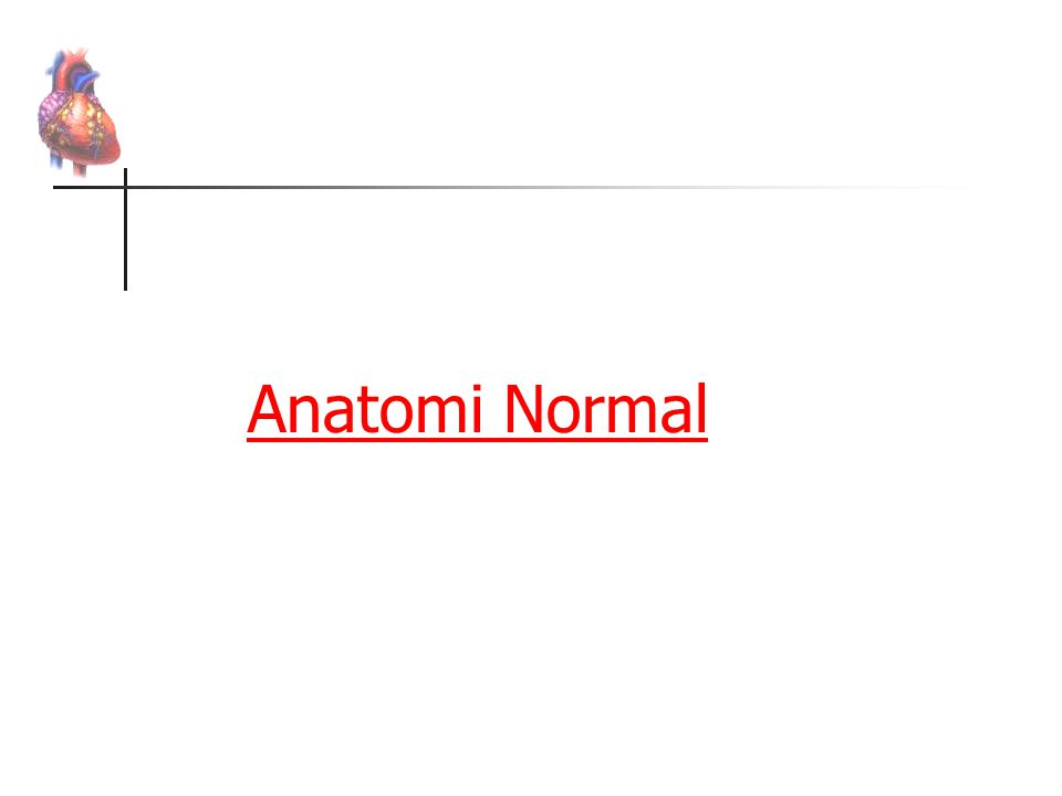 Anatomi Normal