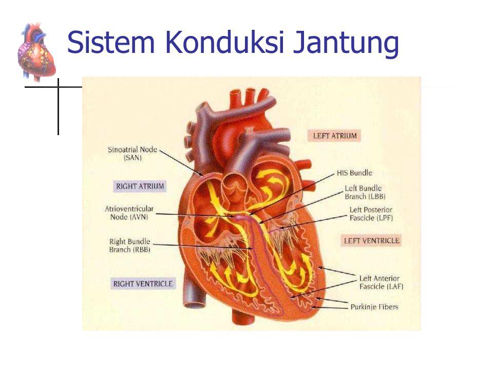 Sistem Konduksi Jantung