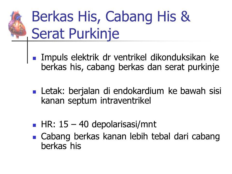 Berkas His, Cabang His & Serat Purkinje