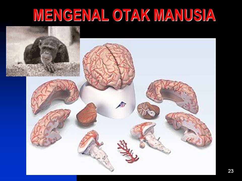 MENGENAL OTAK MANUSIA