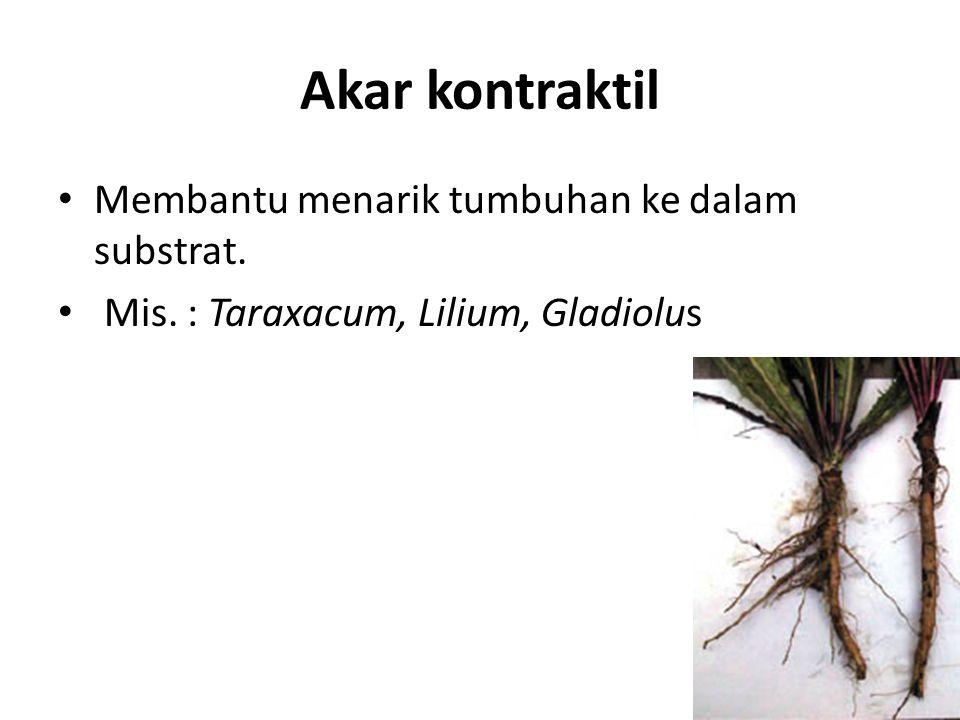 Akar kontraktil Membantu menarik tumbuhan ke dalam substrat.