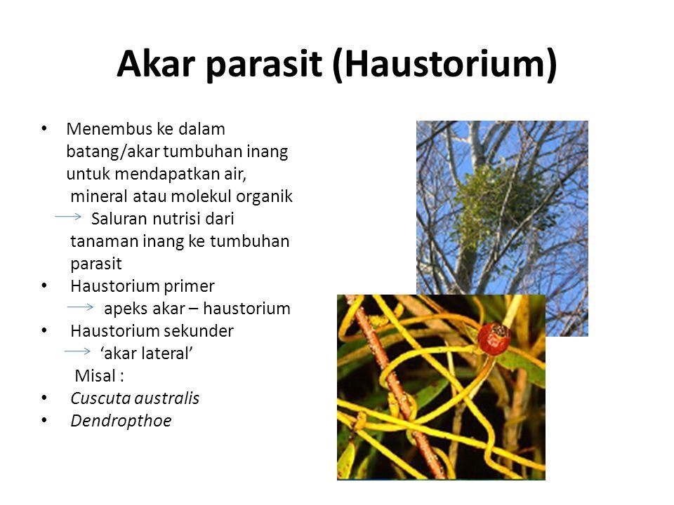 Akar parasit (Haustorium)