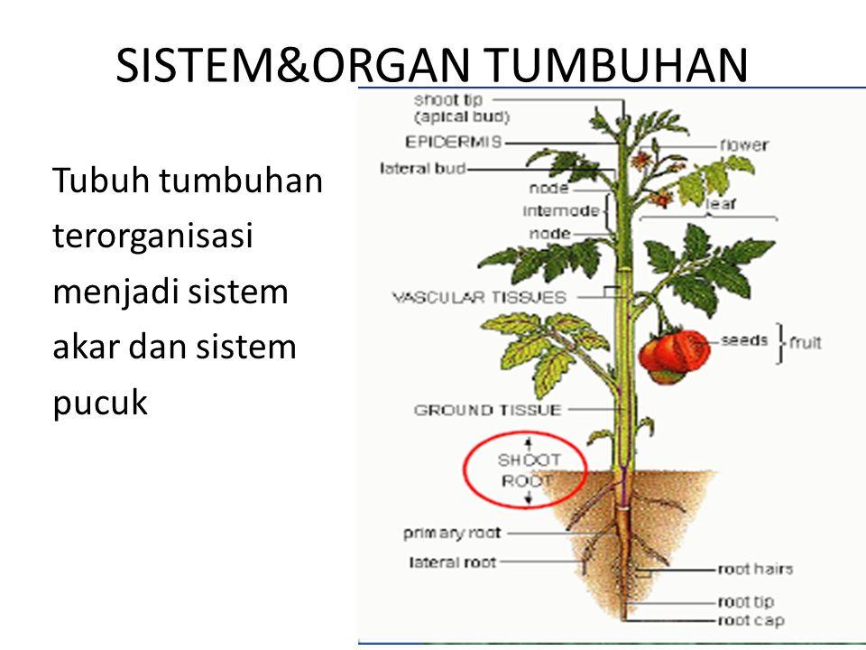 SISTEM&ORGAN TUMBUHAN