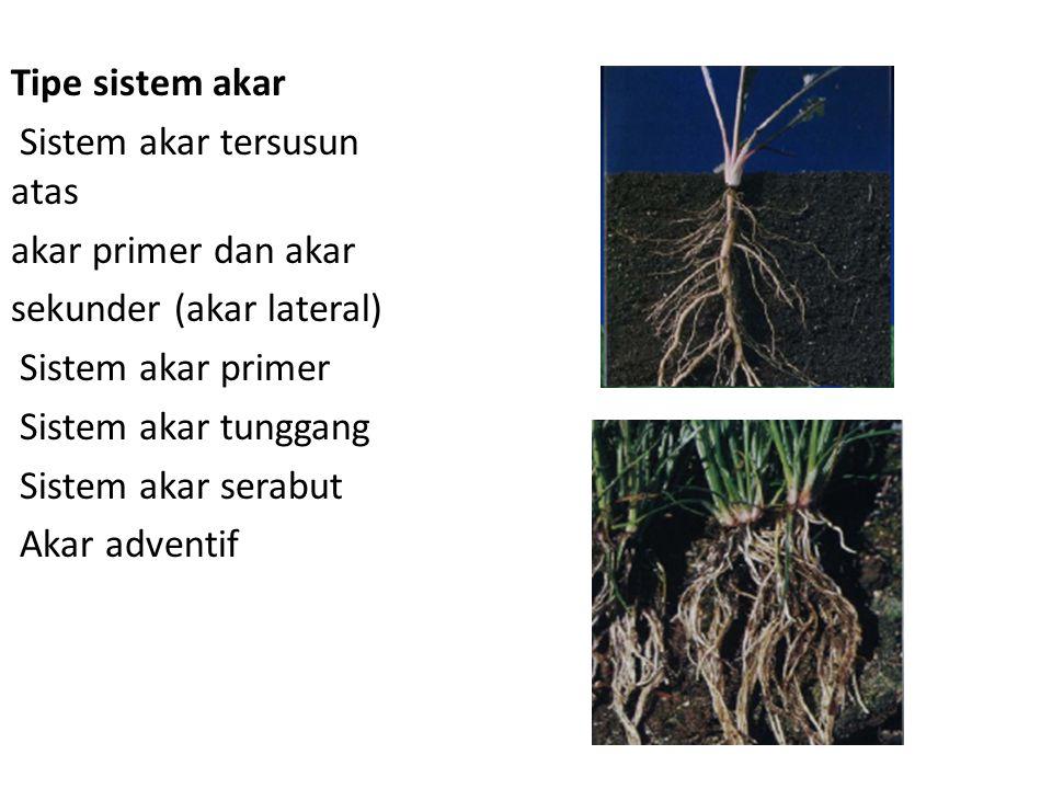 Tipe sistem akar Sistem akar tersusun atas. akar primer dan akar. sekunder (akar lateral) Sistem akar primer.