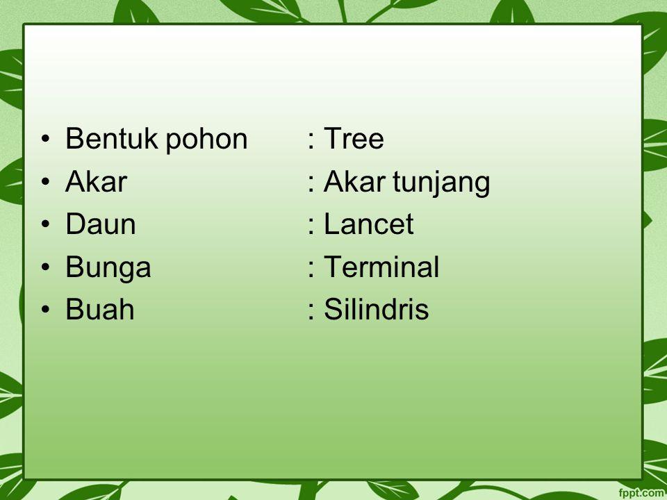 Bentuk pohon : Tree Akar : Akar tunjang Daun : Lancet Bunga : Terminal Buah : Silindris