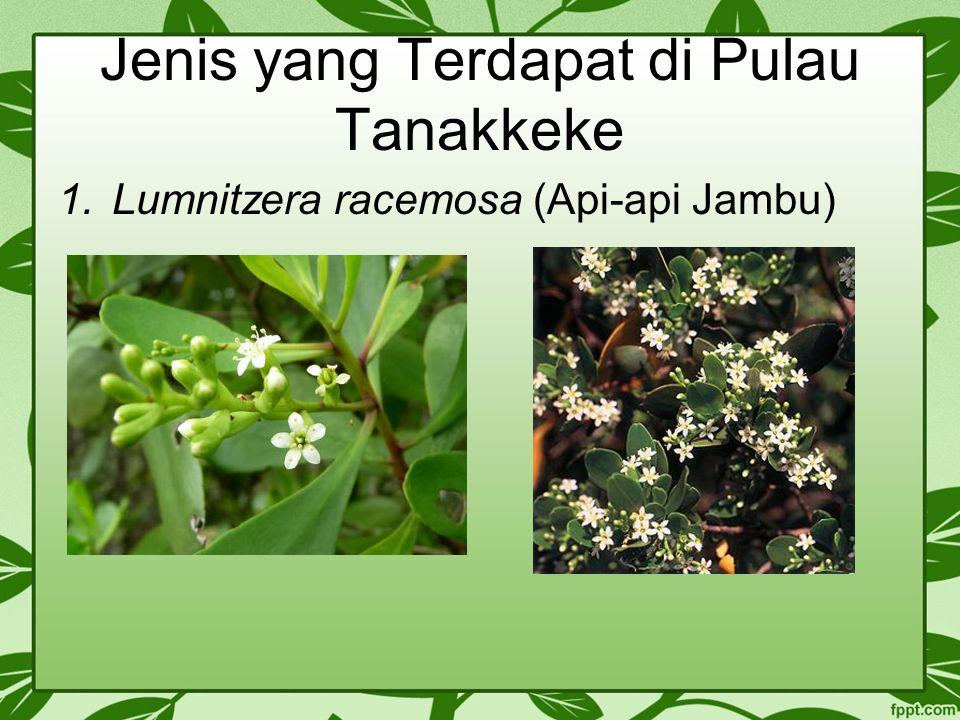 Jenis yang Terdapat di Pulau Tanakkeke