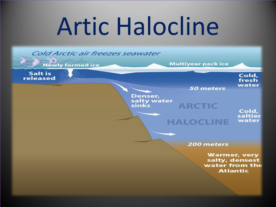 Artic Halocline