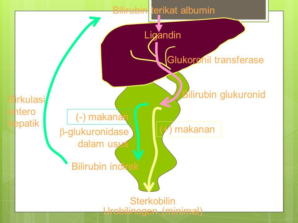 Bilirubin terikat albumin