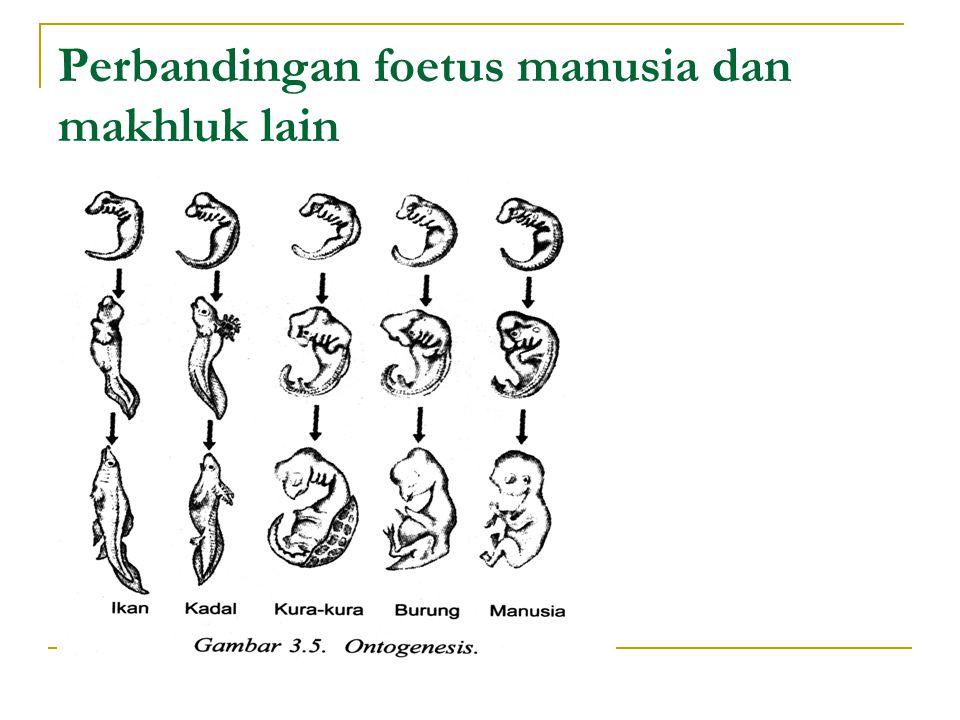 Perbandingan foetus manusia dan makhluk lain