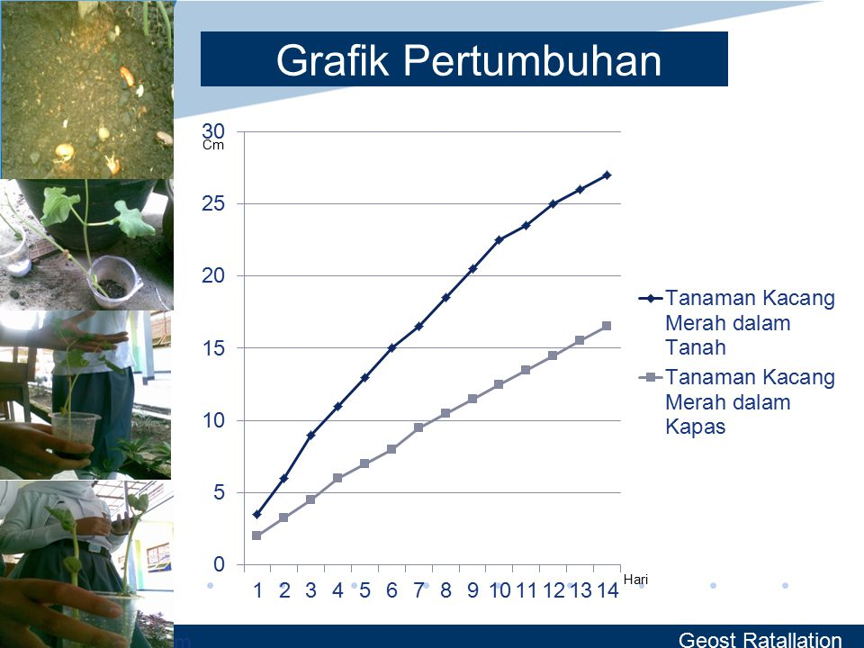 Grafik Pertumbuhan Geost Ratallation