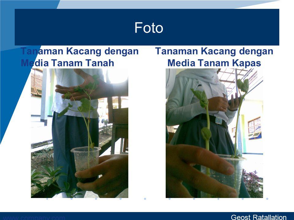 Foto Tanaman Kacang dengan Media Tanam Tanah