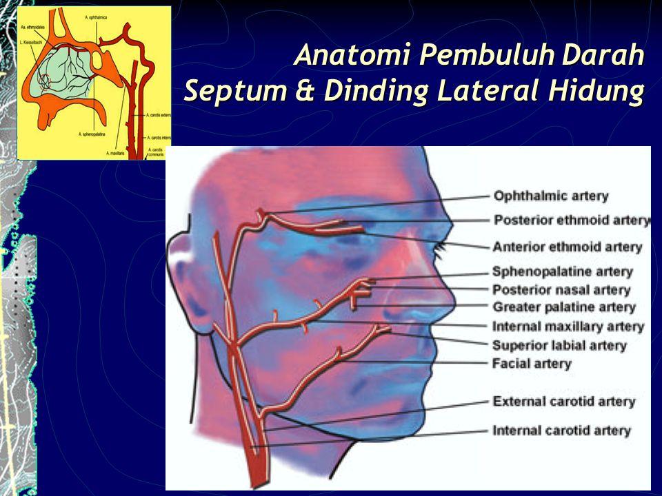 Anatomi Pembuluh Darah Septum & Dinding Lateral Hidung