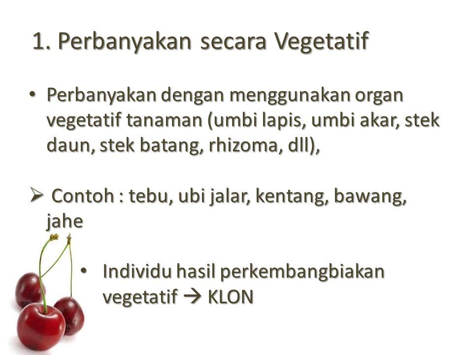 1. Perbanyakan secara Vegetatif