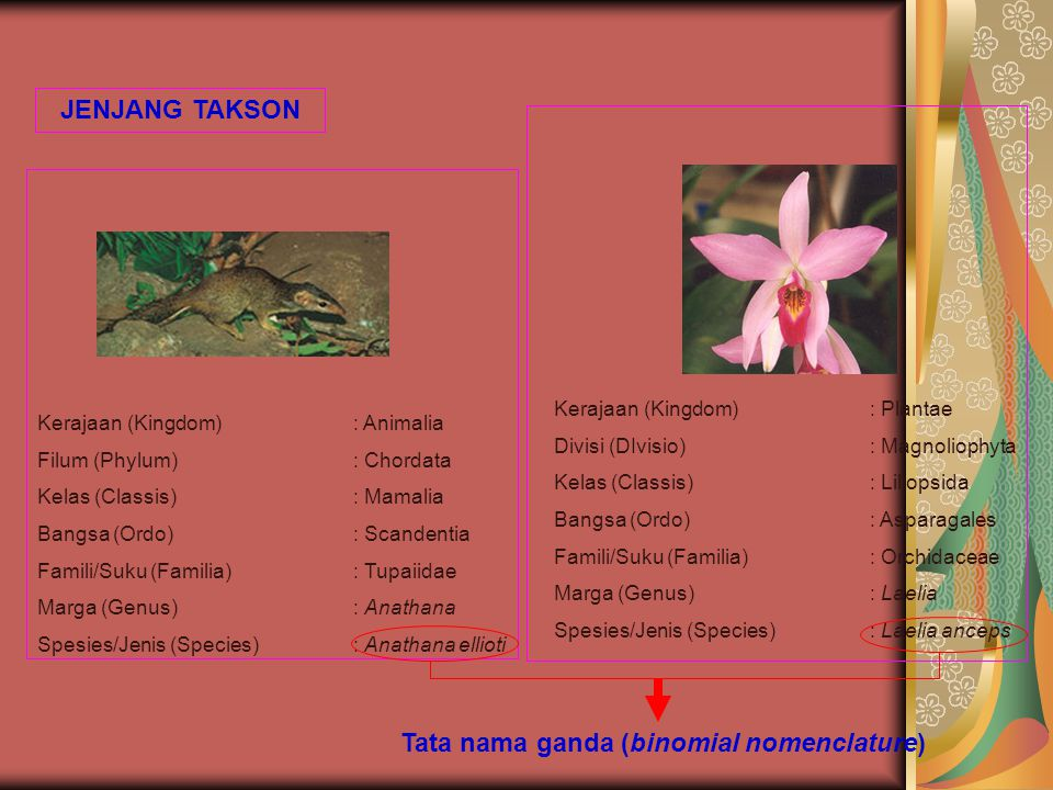 Tata nama ganda (binomial nomenclature)