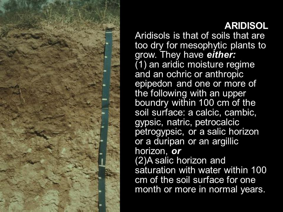ARIDISOL Aridisols is that of soils that are too dry for mesophytic plants to grow. They have either: