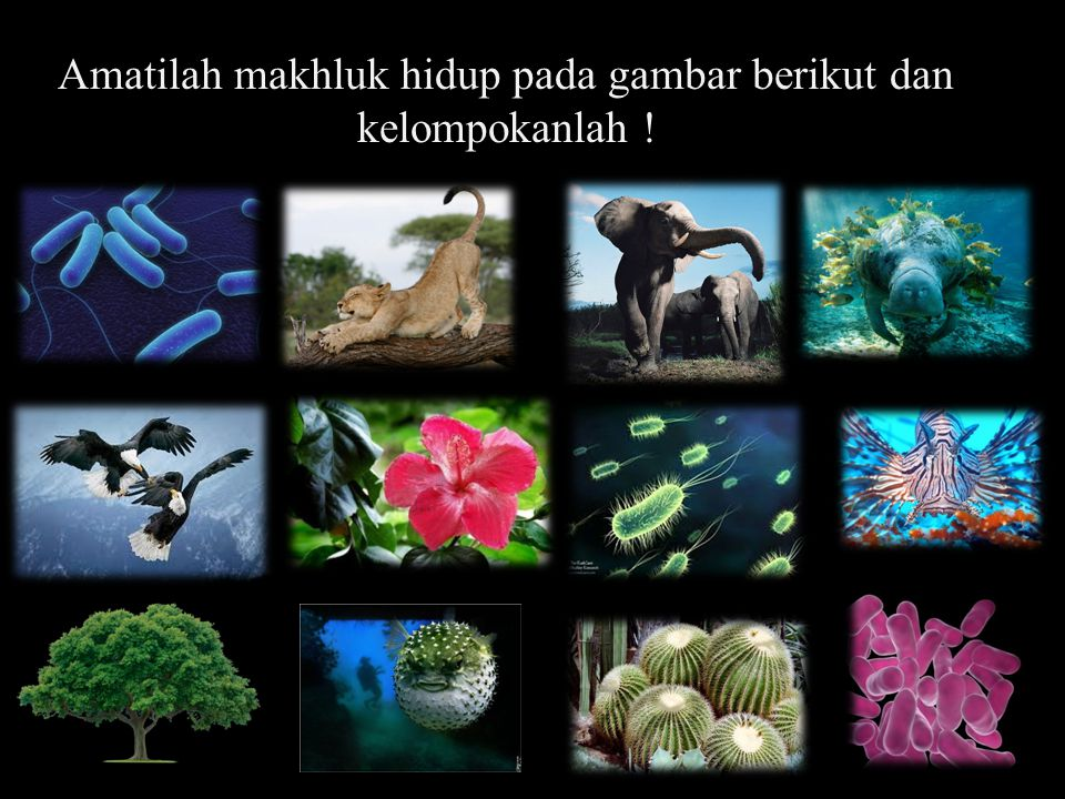 Amatilah makhluk hidup pada gambar berikut dan kelompokanlah !