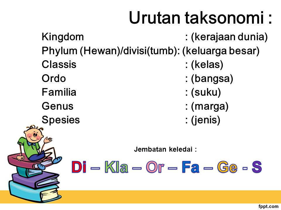 Urutan taksonomi : Di – Kla – Or – Fa – Ge - S