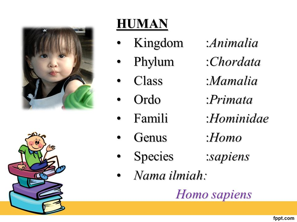 HUMAN Kingdom :Animalia. Phylum :Chordata. Class :Mamalia. Ordo :Primata. Famili :Hominidae.