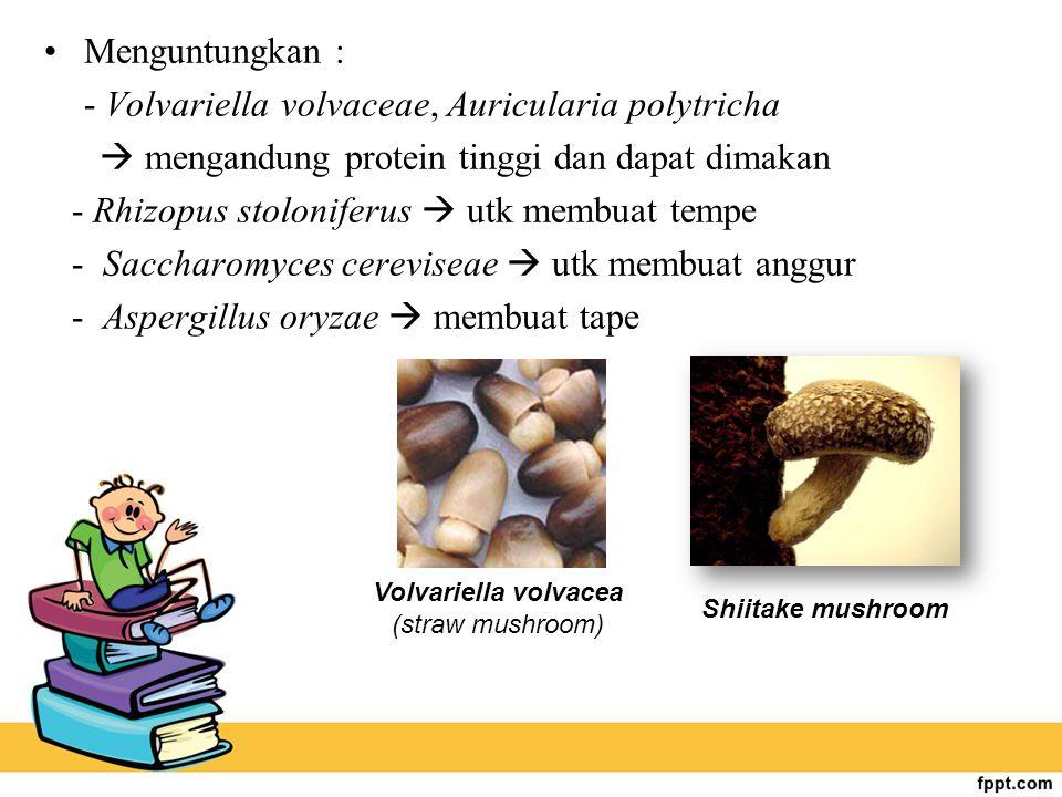 - Volvariella volvaceae, Auricularia polytricha