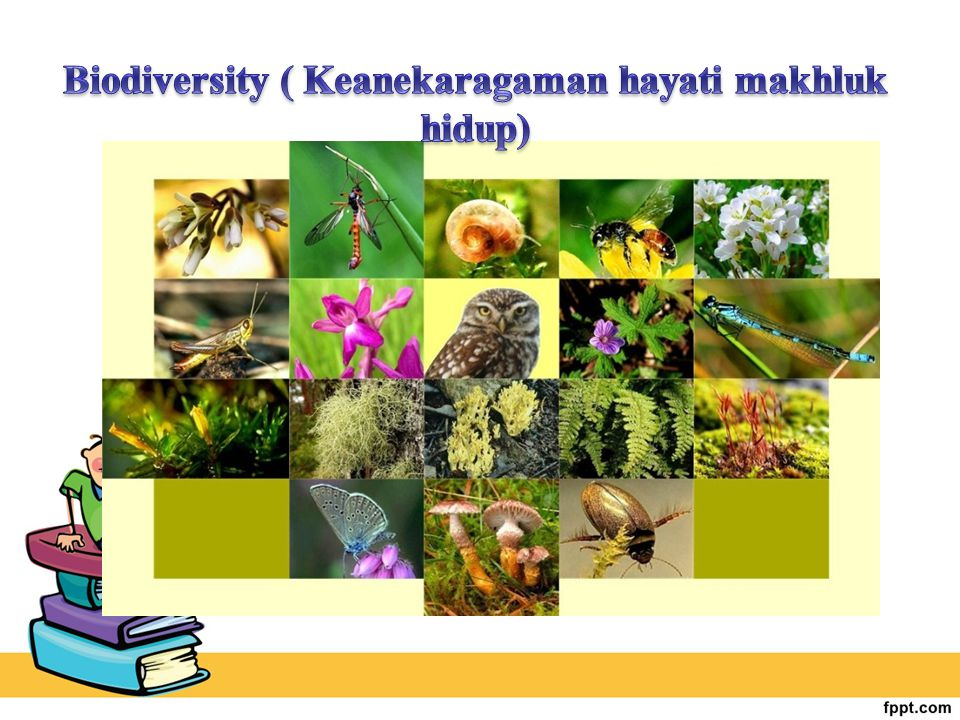 Biodiversity ( Keanekaragaman hayati makhluk hidup)