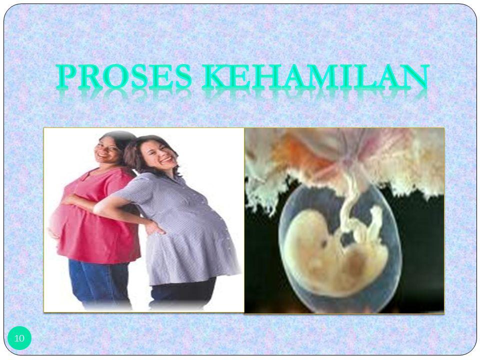 Proses kehamilan