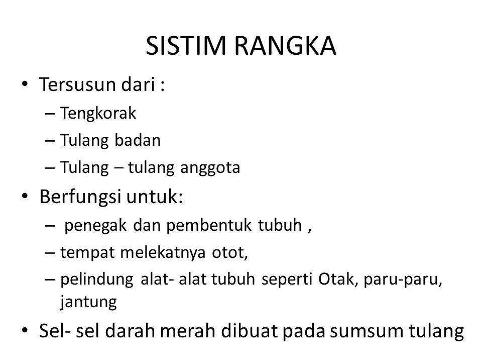 SISTIM RANGKA Tersusun dari : Berfungsi untuk: