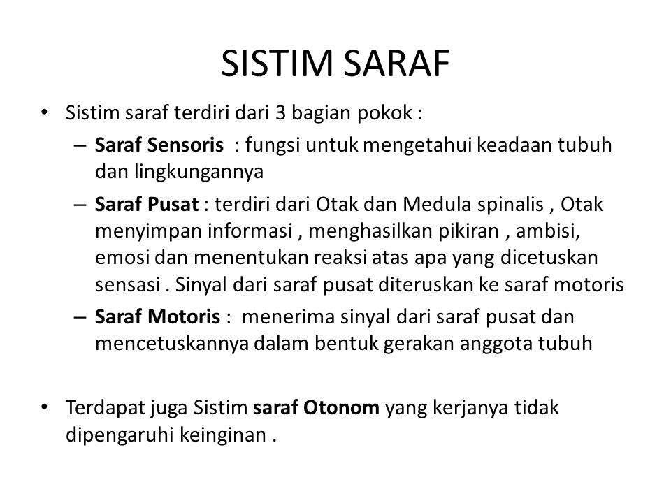 SISTIM SARAF Sistim saraf terdiri dari 3 bagian pokok :