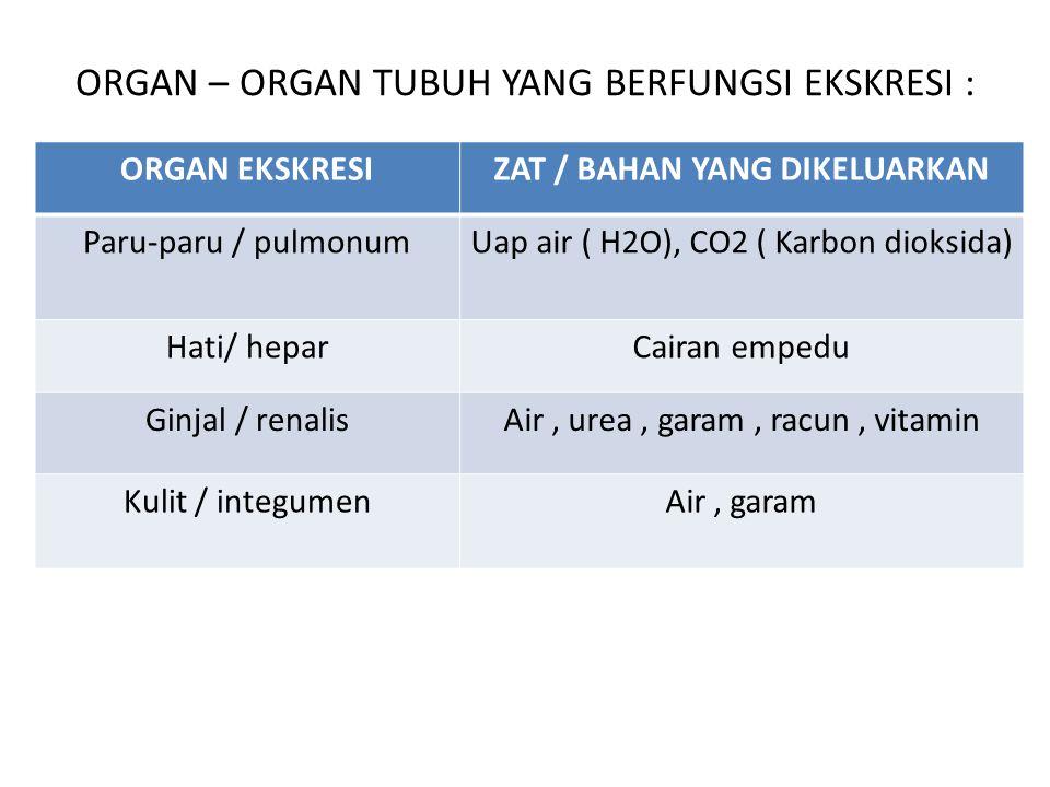 ORGAN – ORGAN TUBUH YANG BERFUNGSI EKSKRESI :