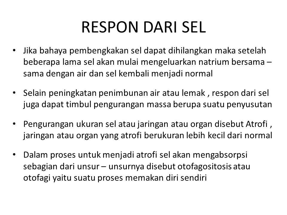 RESPON DARI SEL