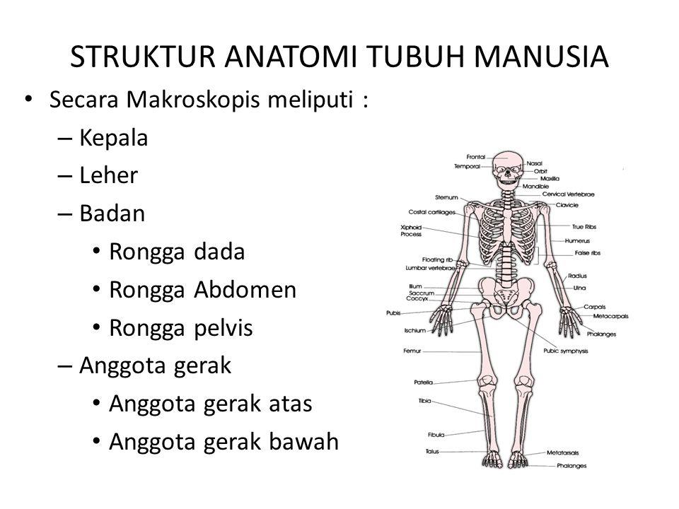 STRUKTUR ANATOMI TUBUH MANUSIA
