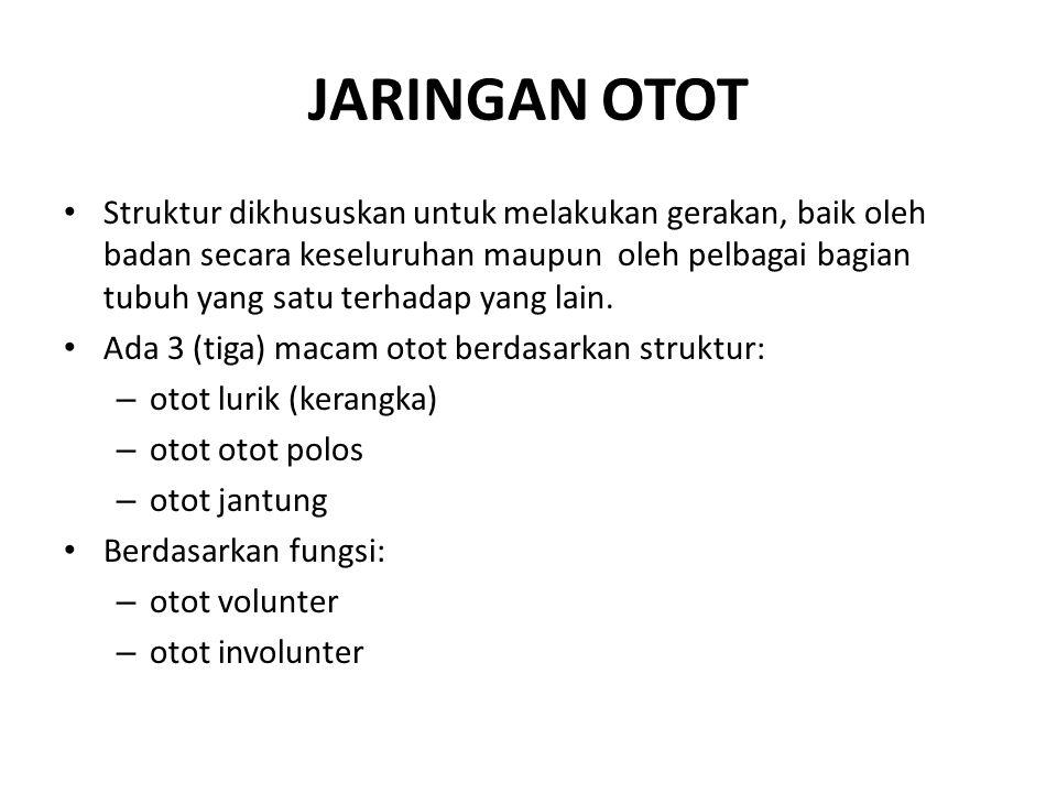 JARINGAN OTOT