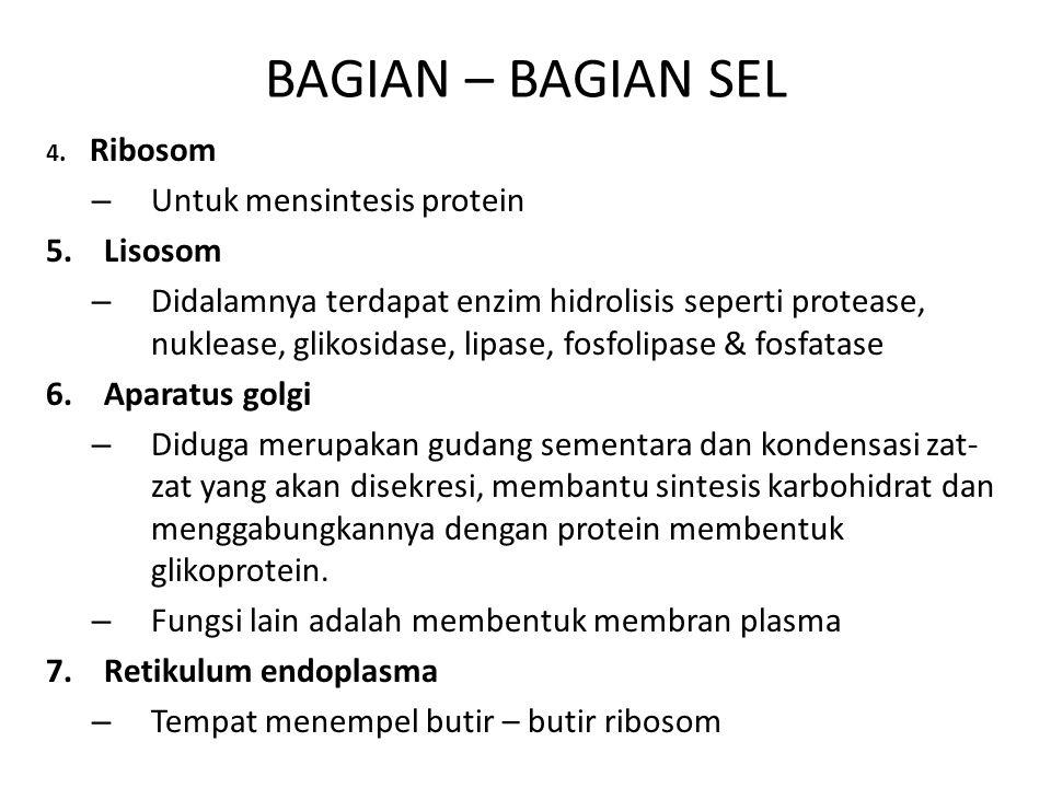 BAGIAN – BAGIAN SEL Untuk mensintesis protein 5. Lisosom