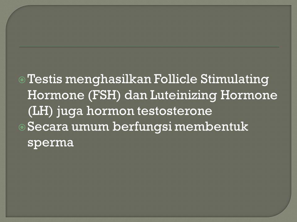 Testis menghasilkan Follicle Stimulating Hormone (FSH) dan Luteinizing Hormone (LH) juga hormon testosterone