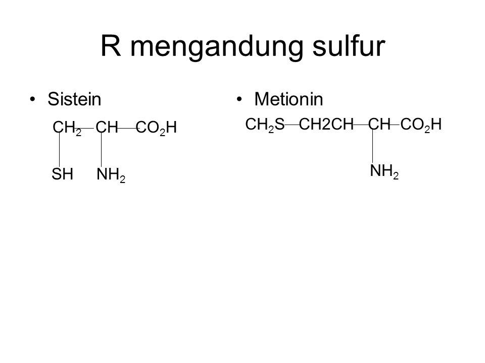 R mengandung sulfur Sistein CH2 CH CO2H Metionin CH2S CH2CH CH CO2H