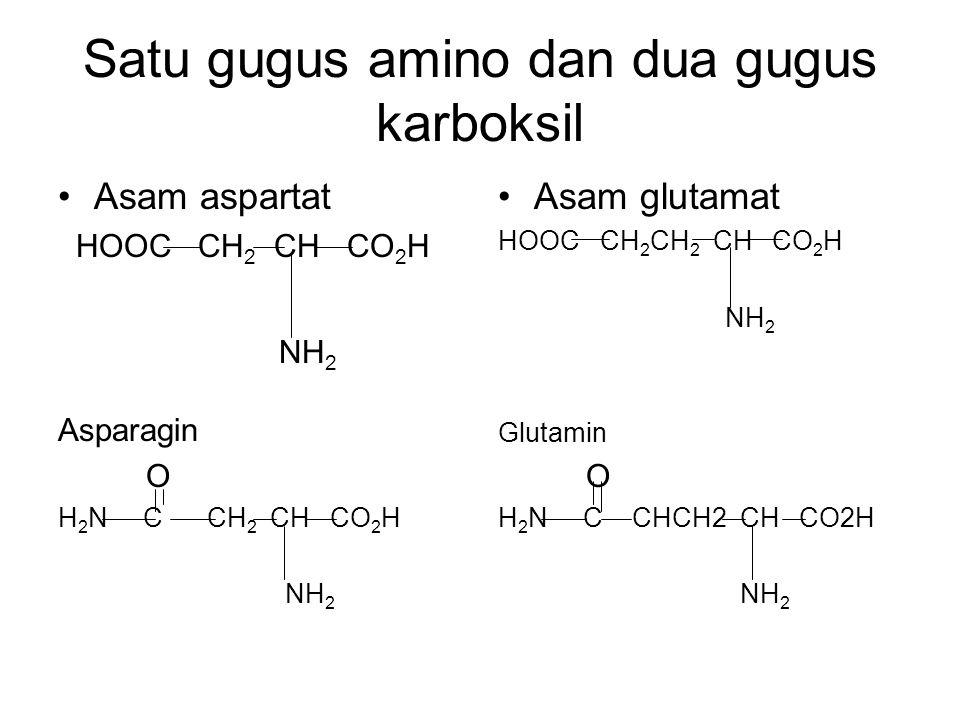 Satu gugus amino dan dua gugus karboksil