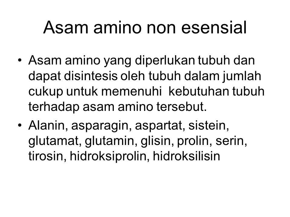 Asam amino non esensial