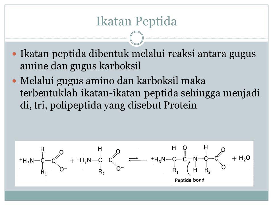 Ikatan Peptida Ikatan peptida dibentuk melalui reaksi antara gugus amine dan gugus karboksil.