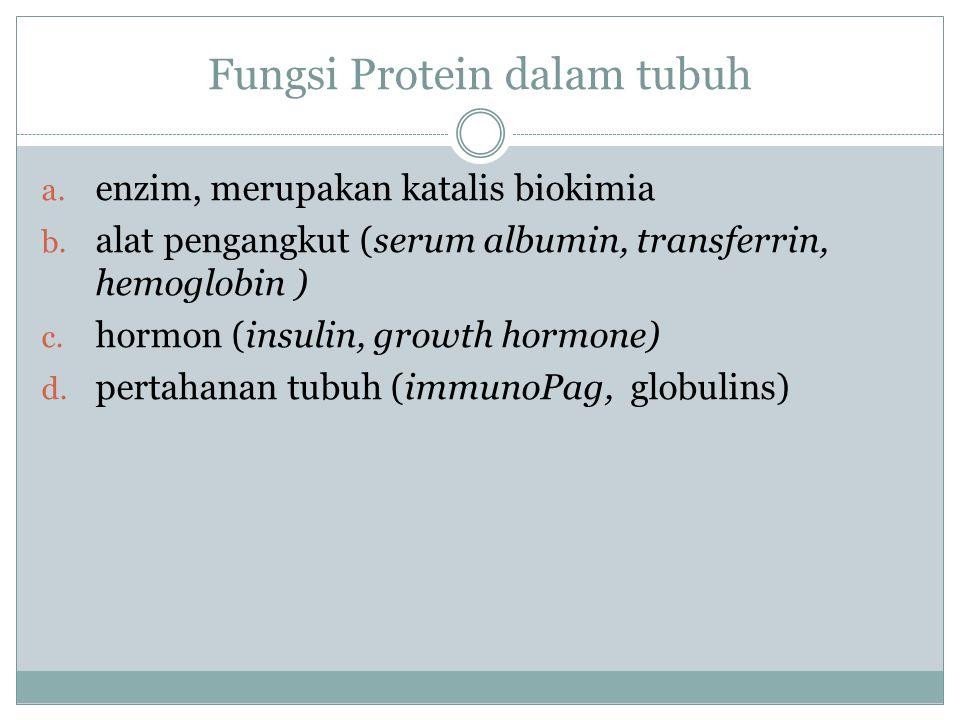 Fungsi Protein dalam tubuh