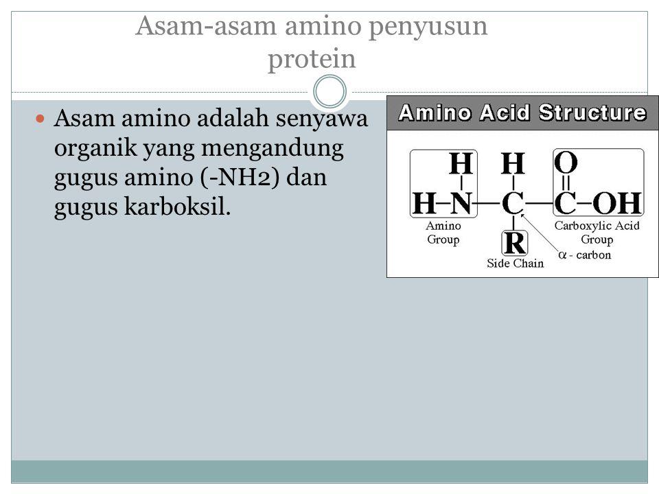 Asam-asam amino penyusun protein