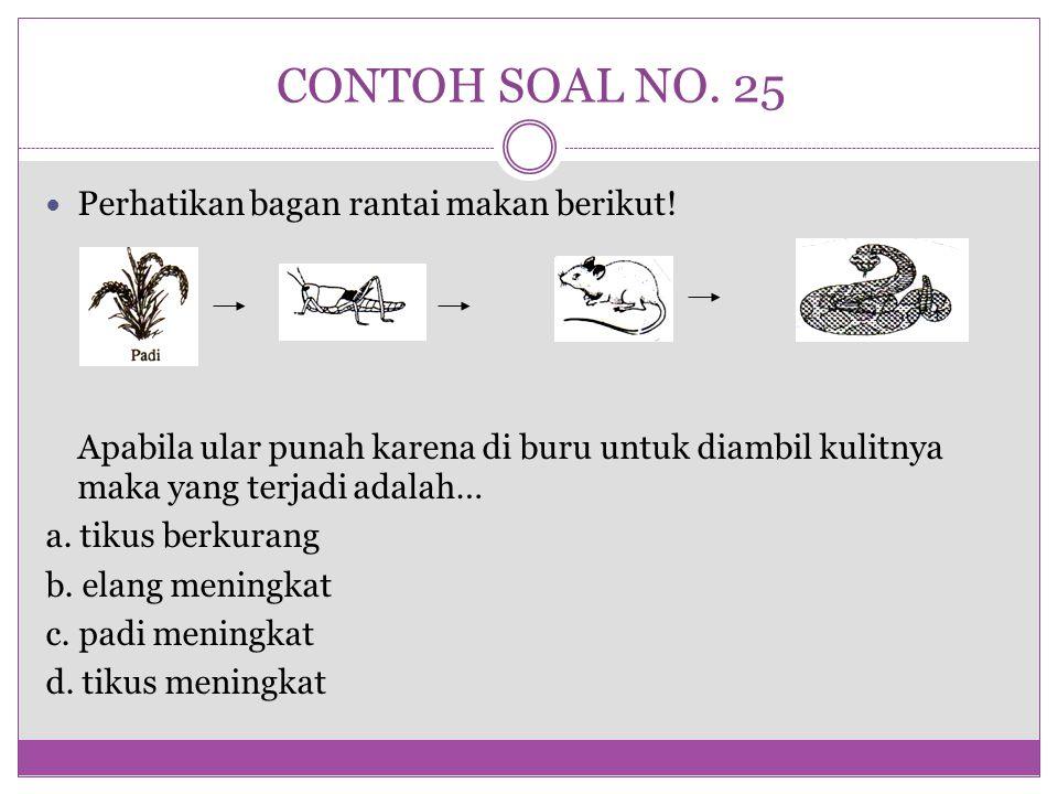 CONTOH SOAL NO. 25 Perhatikan bagan rantai makan berikut!