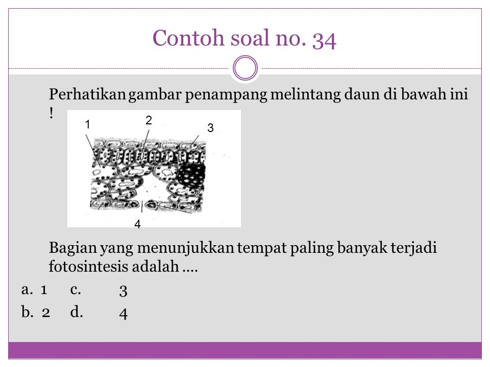 Contoh soal no. 34 Perhatikan gambar penampang melintang daun di bawah ini !