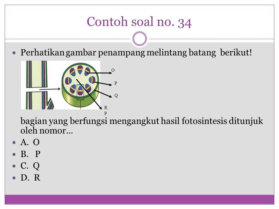 Contoh soal no. 34 Perhatikan gambar penampang melintang batang berikut! bagian yang berfungsi mengangkut hasil fotosintesis ditunjuk oleh nomor...