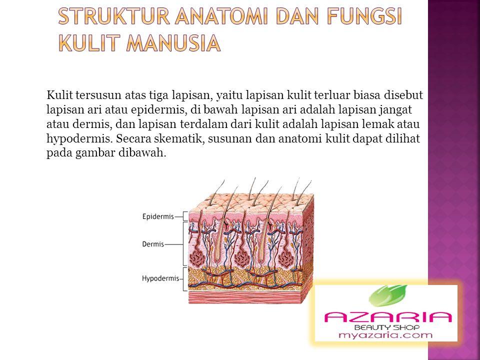Struktur Anatomi Dan Fungsi Kulit Manusia