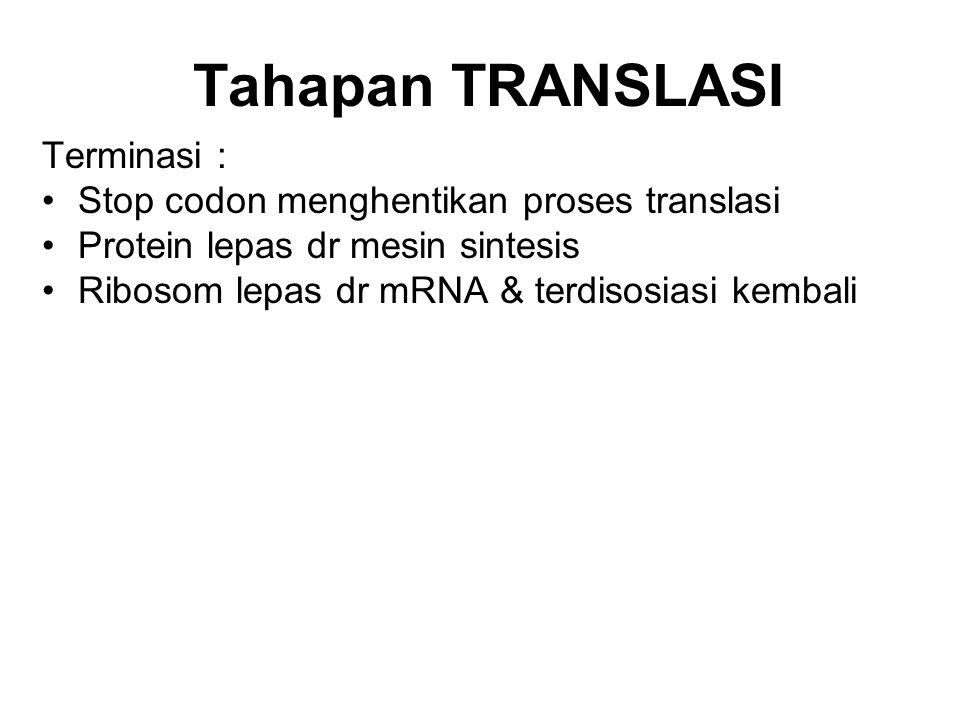 Tahapan TRANSLASI Terminasi : Stop codon menghentikan proses translasi