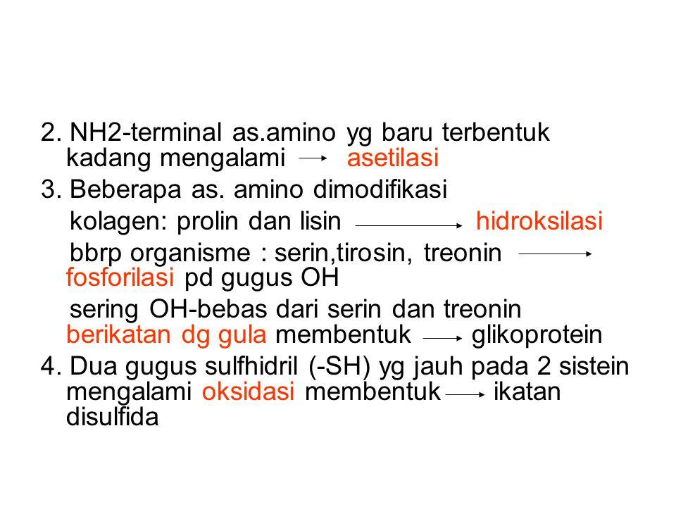 2. NH2-terminal as.amino yg baru terbentuk kadang mengalami asetilasi